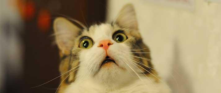 cat looking shocked
